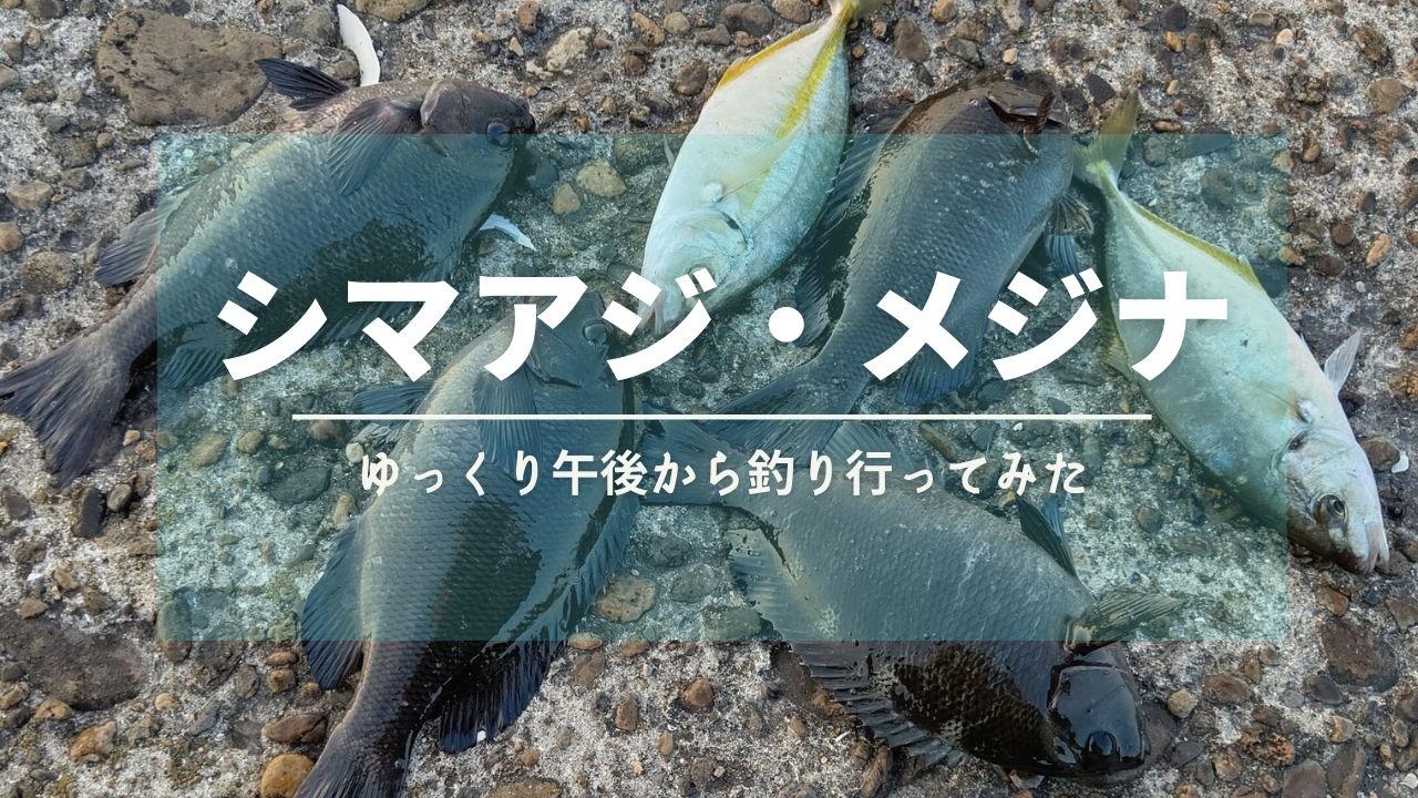 シマアジ・メジナ【鹿島港/茨城】