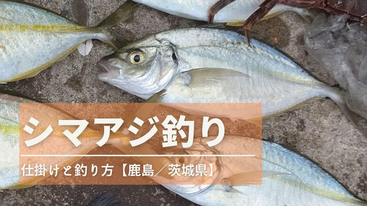 シマアジ釣り【仕掛けと釣り方】